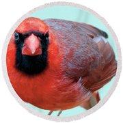 Male Cardinal Portrait Round Beach Towel