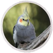 Round Beach Towel featuring the photograph Male Cockatiel by Judy Whitton