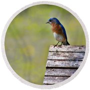 Male Eastern Bluebird Round Beach Towel by Lana Trussell