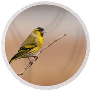 Male Eurasian Siskin Round Beach Towel by Liz Leyden