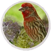 Round Beach Towel featuring the photograph Male Finch In Hydrangesa by Debbie Portwood