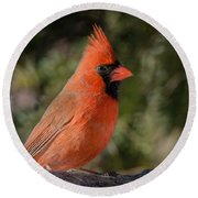 Male Northern Cardinal 3 Round Beach Towel