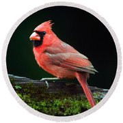 Male Northern Cardinal Cardinalis Round Beach Towel by Panoramic Images