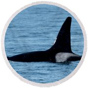 Round Beach Towel featuring the photograph Male Orca Killer Whale In Monterey Bay 2013 by California Views Mr Pat Hathaway Archives