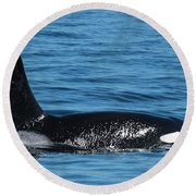 Round Beach Towel featuring the photograph Lonesome George Ca165  Male Orca Killer Whale In Monterey Bay California 2013 by California Views Mr Pat Hathaway Archives