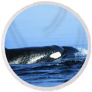 Round Beach Towel featuring the photograph Male Orca Off The San Juan Islands Washington 1986 by California Views Mr Pat Hathaway Archives