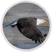 Male Wild Bald Eagle Ready To Land Round Beach Towel