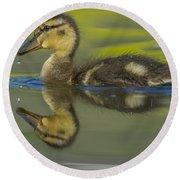 Mallard Duck Chick Swimming In Marsh Round Beach Towel