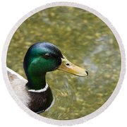 Round Beach Towel featuring the photograph Mallard Duck Closeup by David Millenheft