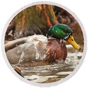 Mallard Duck Taking Bath Round Beach Towel