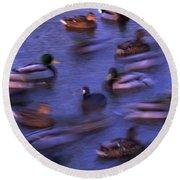 Mallard Ducks Swimming Round Beach Towel