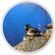 Mallard Looking Over His Domain Round Beach Towel