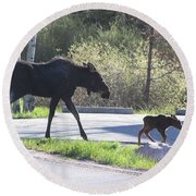 Mama And Baby Moose Round Beach Towel