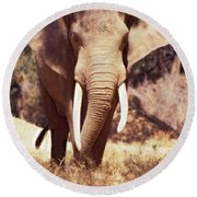 Mana Pools Elephant Round Beach Towel