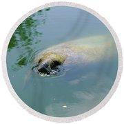 Manatee Trichechus Manatus Swimming Round Beach Towel