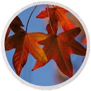 Maple Leaves In The Fall Round Beach Towel by Stephen Anderson