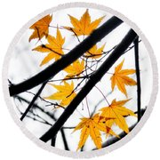 Round Beach Towel featuring the photograph Maple Leaves by Jonathan Nguyen