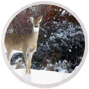 March Snow And A Doe Round Beach Towel