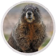 Round Beach Towel featuring the photograph Marmot by Mae Wertz
