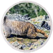 Marmot Going To Round Beach Towel