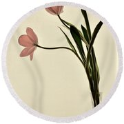Mauve Tulips In Glass Vase Round Beach Towel