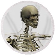 Medical Illustration Of A Womans Skull Round Beach Towel