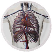 Medical Illustration Of Male Chest Round Beach Towel