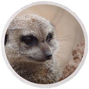 Meerkat 7 Round Beach Towel