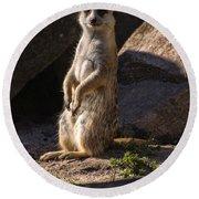 Meerkat Round Beach Towel by Chris Flees