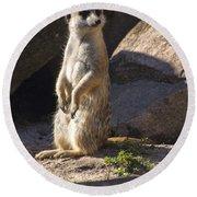 Meerkat Looking Left Round Beach Towel by Chris Flees