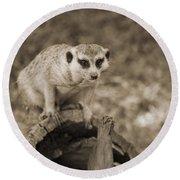 Meerkat On A Log Round Beach Towel