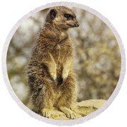 Meerkat On Hill Round Beach Towel