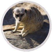 Meerkat Resting On A Rock Round Beach Towel by Chris Flees