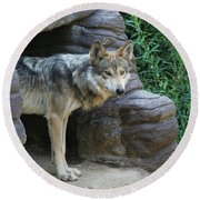 Mexican Wolf #2 Round Beach Towel