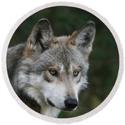Mexican Wolf #4 Round Beach Towel