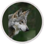 Mexican Wolf #5 Round Beach Towel