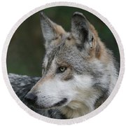 Mexican Wolf #6 Round Beach Towel by Judy Whitton
