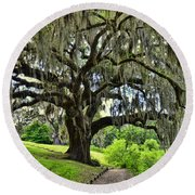 Middleton Place Oak  Round Beach Towel by Allen Beatty