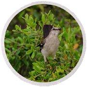 Mockingbird In Tree Round Beach Towel