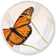 Monarch Butterfly In Flight Round Beach Towel