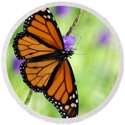 Monarch Butterfly In Spring Round Beach Towel