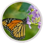 Monarch Butterfly Round Beach Towel by Jane Luxton