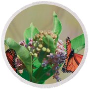 Round Beach Towel featuring the photograph Monarch Gathering by Kerri Farley