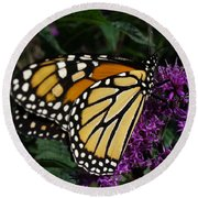 Round Beach Towel featuring the photograph Monarch by Lingfai Leung