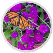 Monarch On Bachelor Buttons Round Beach Towel