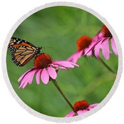 Monarch On Garden Coneflowers Round Beach Towel
