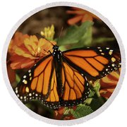Monarch Spotlight. Round Beach Towel