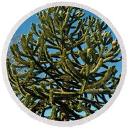 Monkey Puzzle Tree E Round Beach Towel by Tikvah's Hope