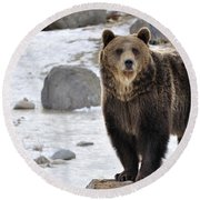 Montana Grizzly  Round Beach Towel