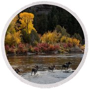 Moose Crossing Round Beach Towel
